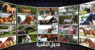 الفحول المتاحة للتشبية - خيول الجمال والسرعة 2019