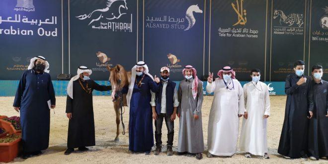 فوز منارة سدير بالمركز الخامس في بطولة المملكة لجمال الخيل العربي الاصيل (كحيله)